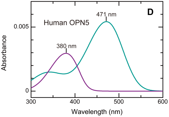Absorption spectra of both forms of OPN5